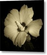 Sharon's Rose Metal Print