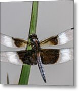 Sharp Focus Dragonfly Metal Print