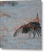 Sharptail Grouse On Snow Metal Print