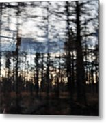 Shasta Trinity National Forest Metal Print