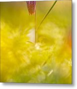 She Comes In Colours Metal Print
