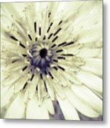 She Wants To Be Beautiful Metal Print