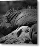 Shedd Aquarium Iguana Metal Print