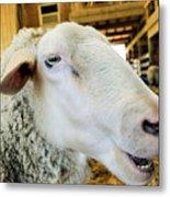Sheep 2 Metal Print