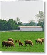Sheep And Covered Bridge Metal Print
