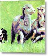 Sheep And Dog Metal Print