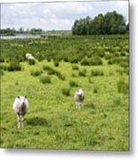 Sheep Animals Metal Print