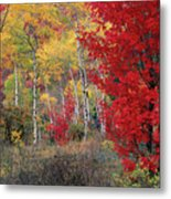 Sheep Canyon In Autumn Metal Print