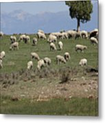 Sheep Country Metal Print