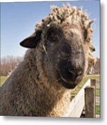 Sheep Face 2 Metal Print