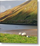 Sheep Grazing In Connemara Ireland Metal Print