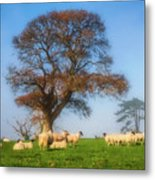 Sheep In Somerset - Impressions Metal Print