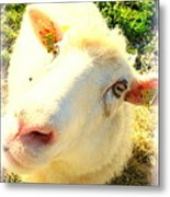 So Sheep Of You To Leave Me Here  Metal Print