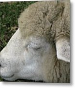 Sheep Sleep Metal Print