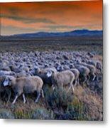 Sheepherder Life Metal Print