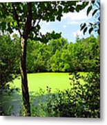 Sheldon Marsh Algae Pond Metal Print