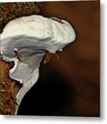 Shelf Fungus On Bark - Quinault Temperate Rain Forest - Olympic Peninsula Wa Metal Print by Christine Till