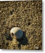Shell At Dawn Metal Print