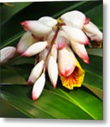 Shell Ginger Flowers Metal Print