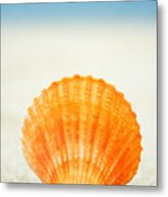 Shell On Beach Metal Print
