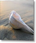 Shell On The Beach Metal Print