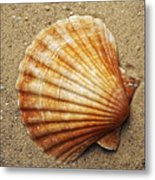Shell On The Sand Metal Print
