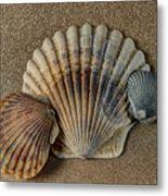 Shells 1 Metal Print