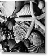 Shells And Starfish In Black And White Metal Print