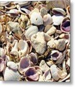Shells Aplenty Metal Print