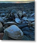 Shells At Sunrise  Metal Print