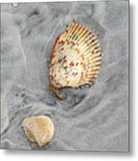 Shells On The Beach II Metal Print