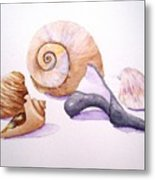 Shells Still Life Metal Print