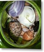 Shells Under Glass II Metal Print
