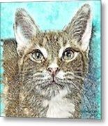 Shelter Cat Fantasy Art Metal Print