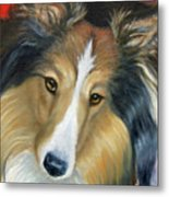 Sheltie - Collie Metal Print