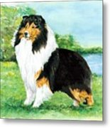 Sheltie Wait Metal Print