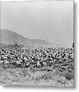 Shepherd And Flock, C1942 Metal Print