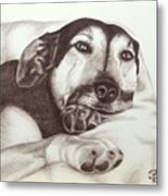 Shepherd Dog Frieda Metal Print