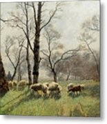 Shepherd With His Flock In The Evening Light Metal Print