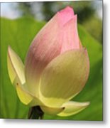 Sherbert Flower Metal Print