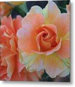Sherbert Rose Metal Print