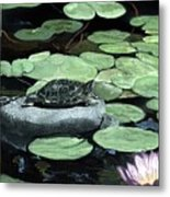 Sherman Garden Turtle Metal Print