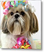 Shih Tzu Dog Metal Print
