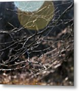 Shimmering Branches Metal Print