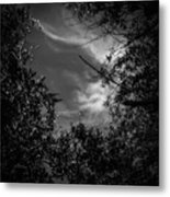 Shimmering Tree Branches Metal Print