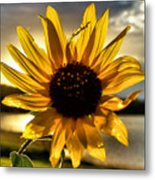 Shine Down Metal Print by Karen M Scovill