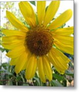 Shine Sunflower Shine Metal Print