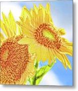 Shining Sunflowers Metal Print