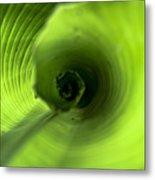 Shiny Green Plant Metal Print