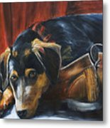 Shoe Dog Metal Print